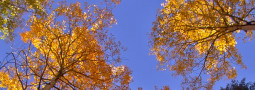 """West Elk Mountains Erupt in """"Riot of Fall Color"""""""